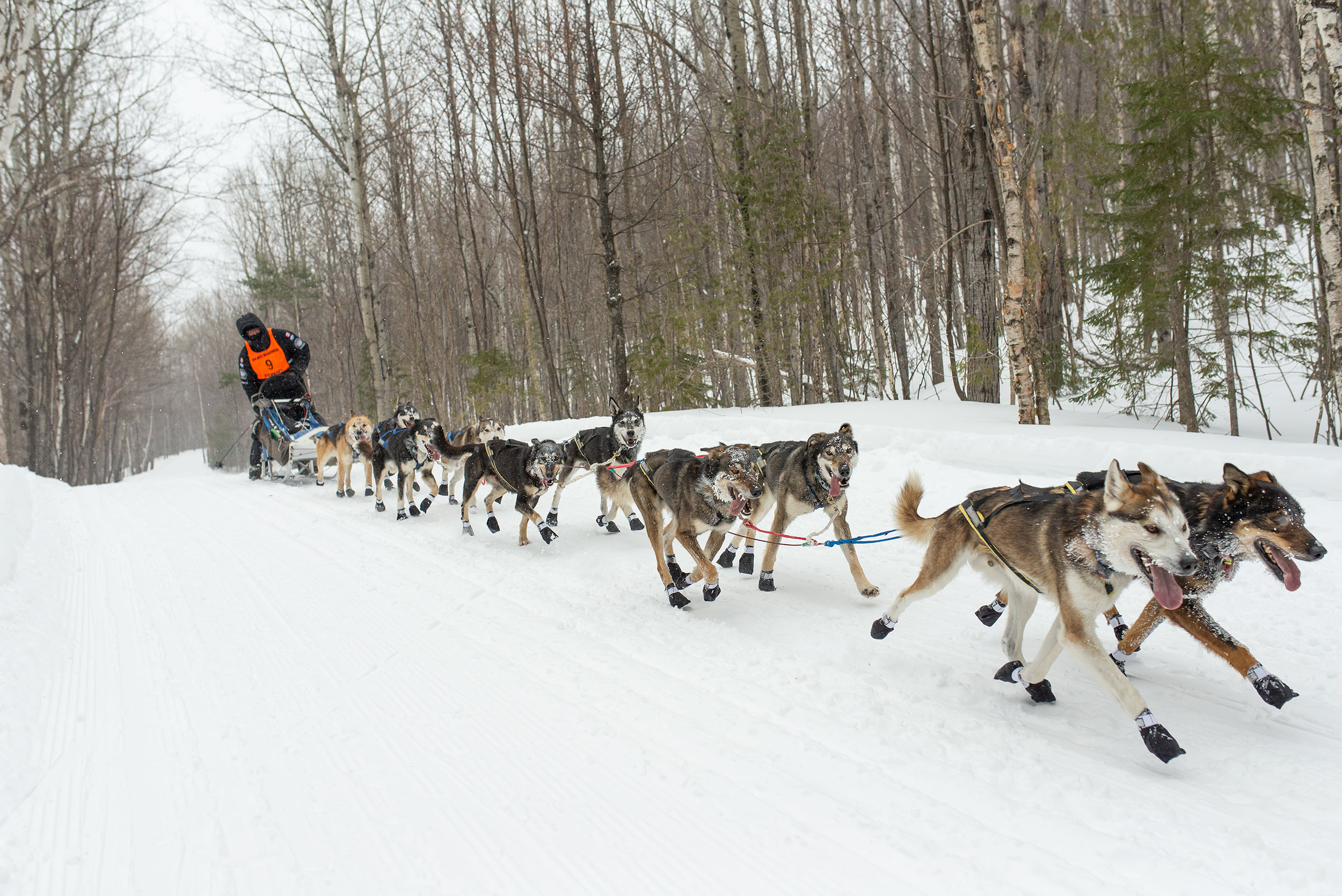 100-mile-wilderness-sled-dog-race-winners-2019