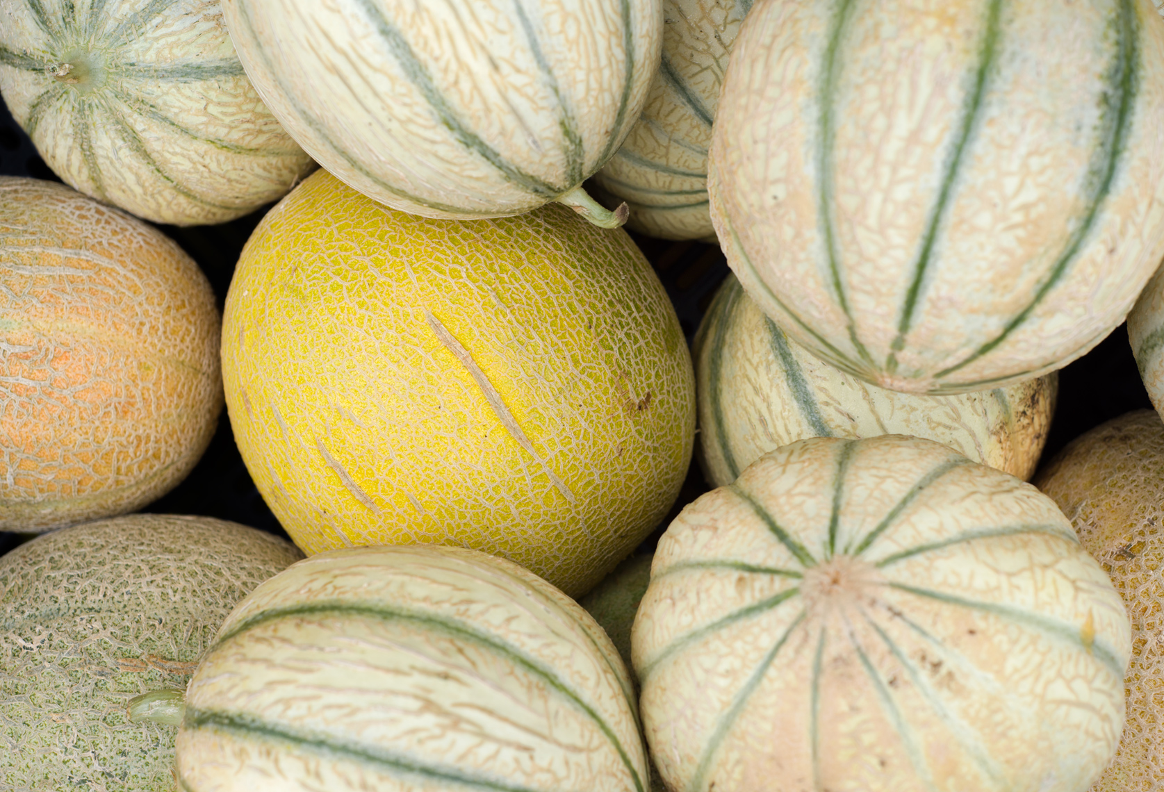 Green Spark Farm melons