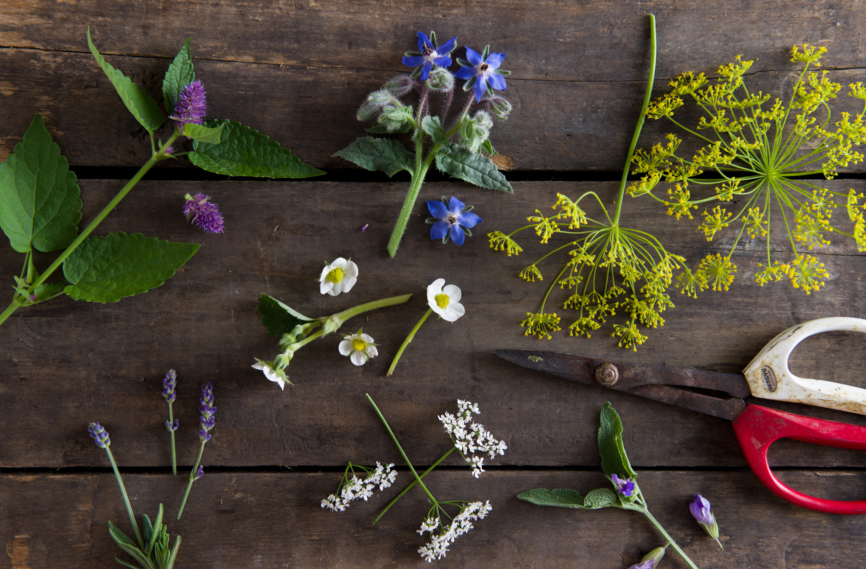 edible herb flowers