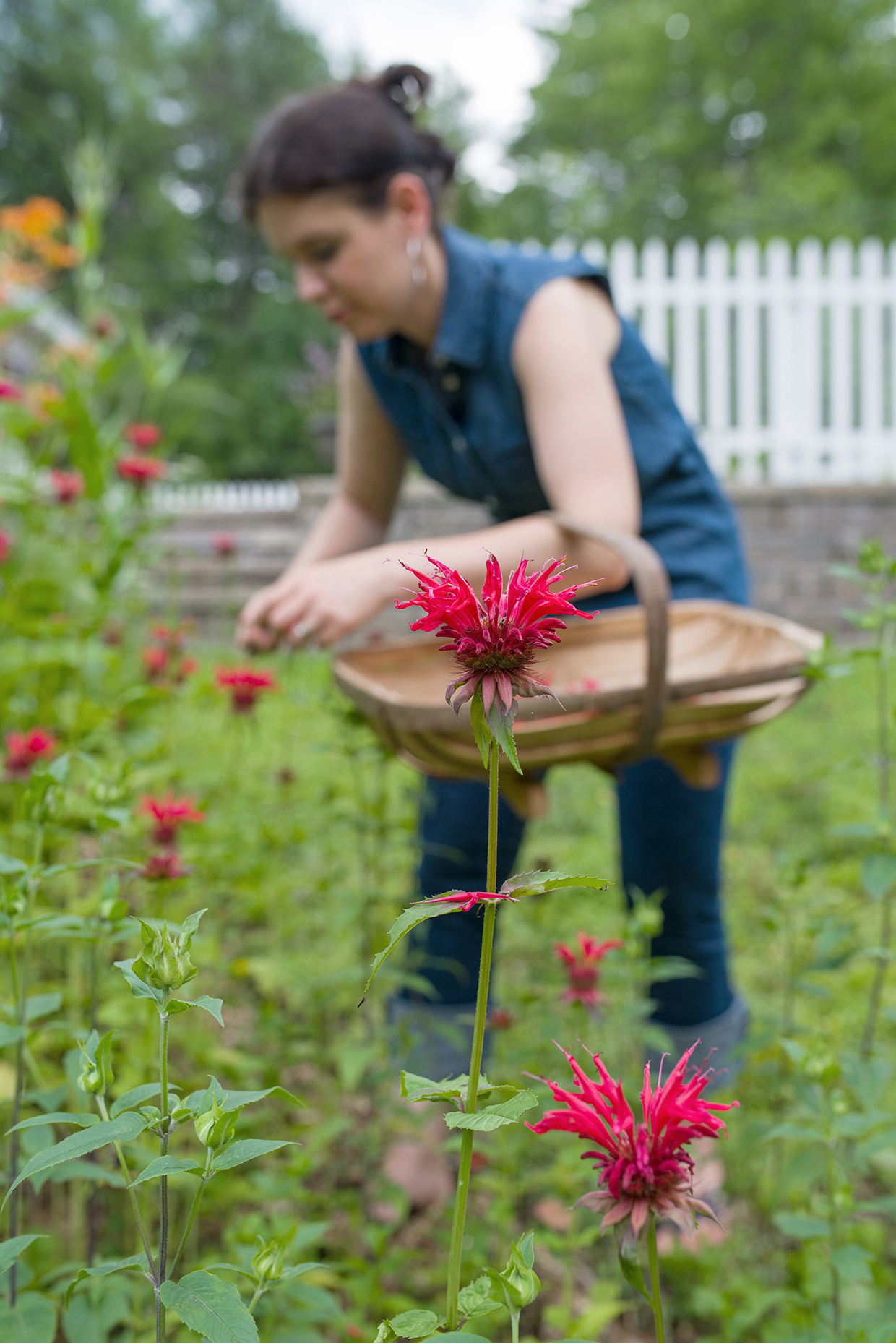 herbal-remedies-bee-balm